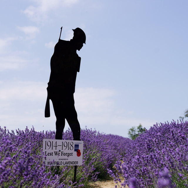 Silent Soldier at Mayfield Lavender