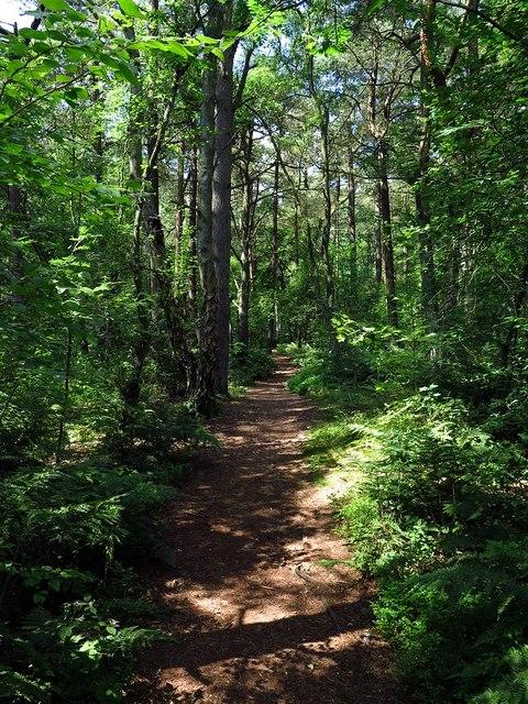 Woodland path, East Moor