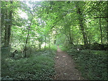 SO8534 : Footpath through the woods, Bushley Green by Jonathan Thacker
