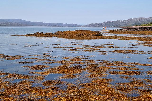 Seaweed in Upper Loch Torridon
