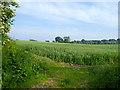 SJ8808 : Oat field south of Brewood in Staffordshire by Roger  Kidd