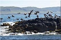 NM3045 : Cairn na Burgh Beg - Birds taking flight by Rob Farrow