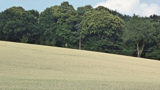 King Edward's Plantation