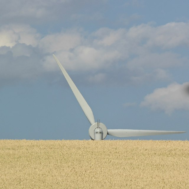 Wind turbine and cereal field