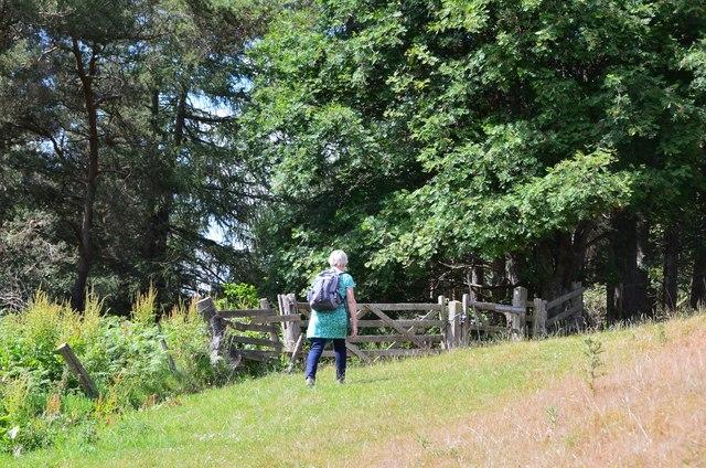 Track into Greenhope Wood