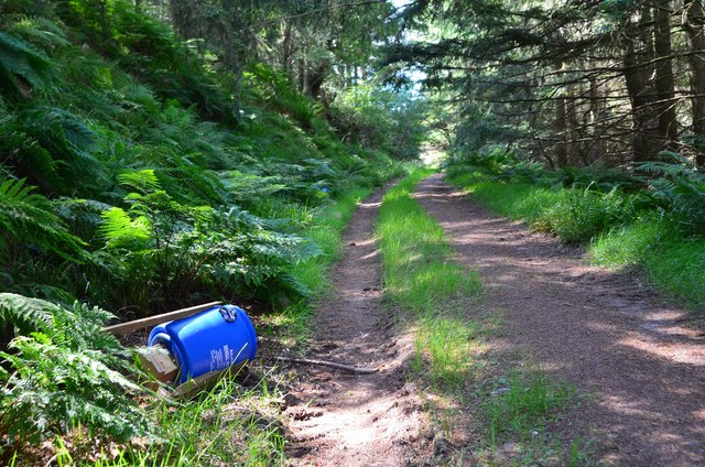 Forest track and feeder