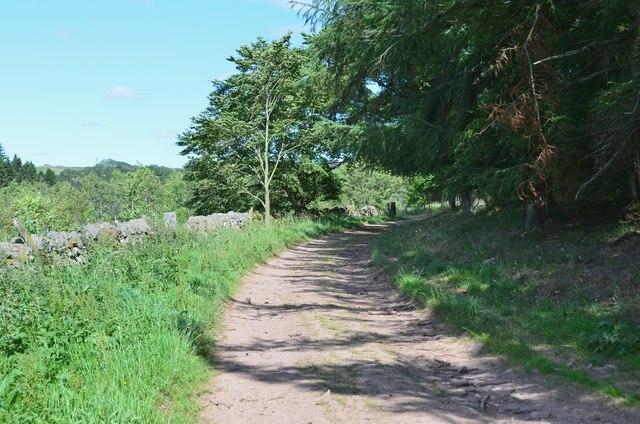Track below Mountjoy Wood
