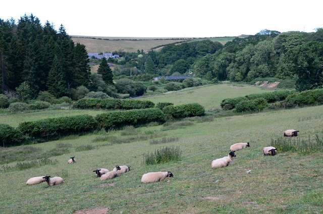Sheep on a hot afternoon, Abbey St Bathans