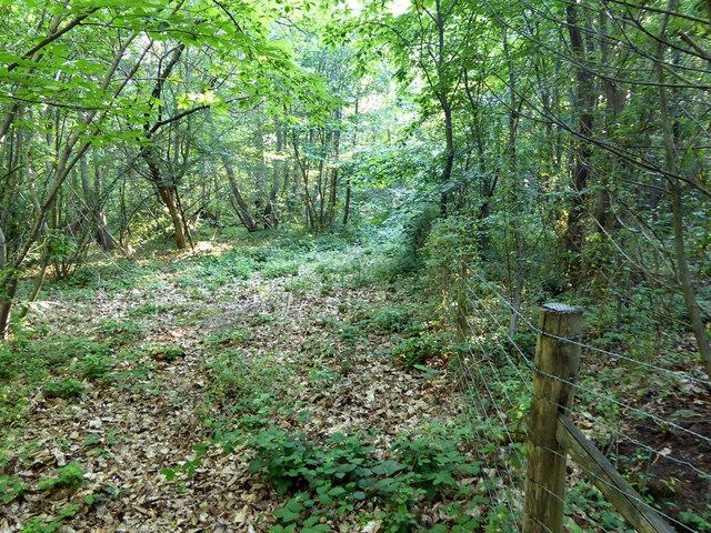 Fence in West Blean Wood