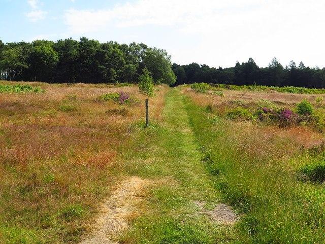 Cawthorn Roman Camps
