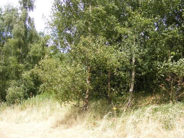 Grange Park Wood