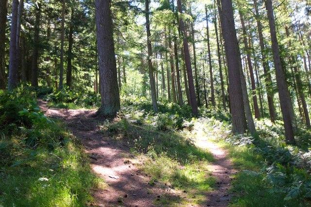 Sunlit forest, Cardrona