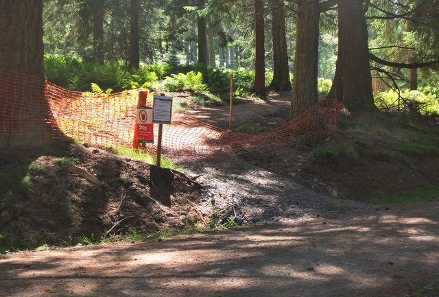 New path, Cardrona Forest (2)