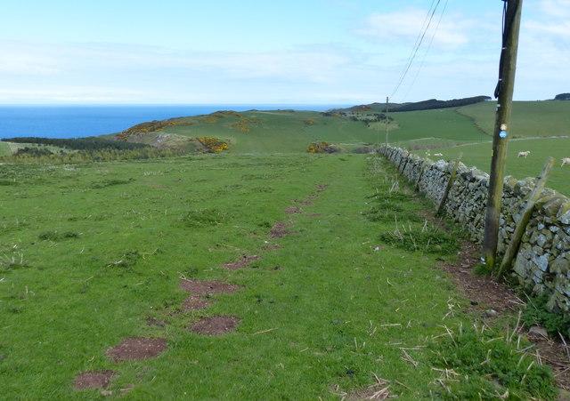Berwickshire Coastal Path at Dowlaw