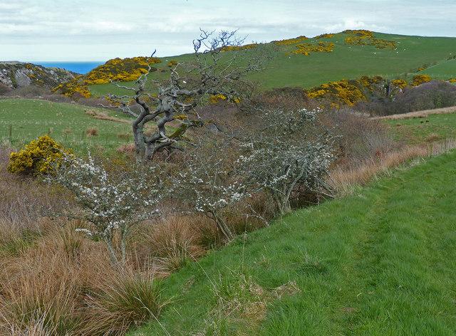 Berwickshire Coastal Path near the Dowlaw Burn