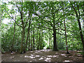 SE3338 : Path through Castle Wood in Roundhay Park by Stephen Craven