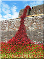 NY3956 : 'Weeping Window' poppy sculpture, Carlisle Castle (2) by Rose and Trev Clough