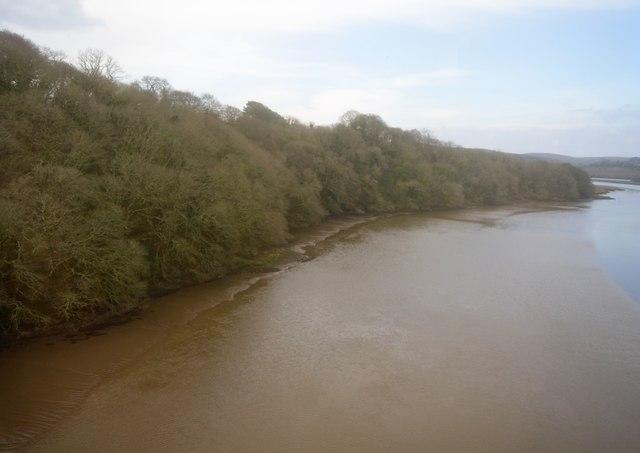 Mud, River Lynher