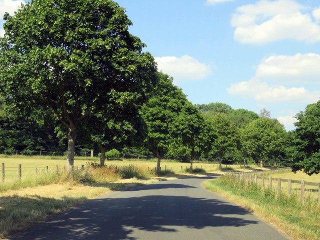 The road to Yanworth