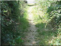 S6810 : Narrow Path by kevin higgins