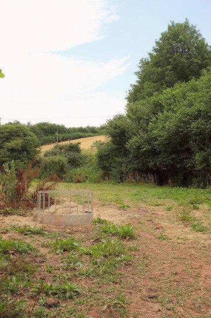 Field, Combe Fishacre