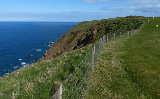 Berwickshire Coastal Path at Brander Heugh