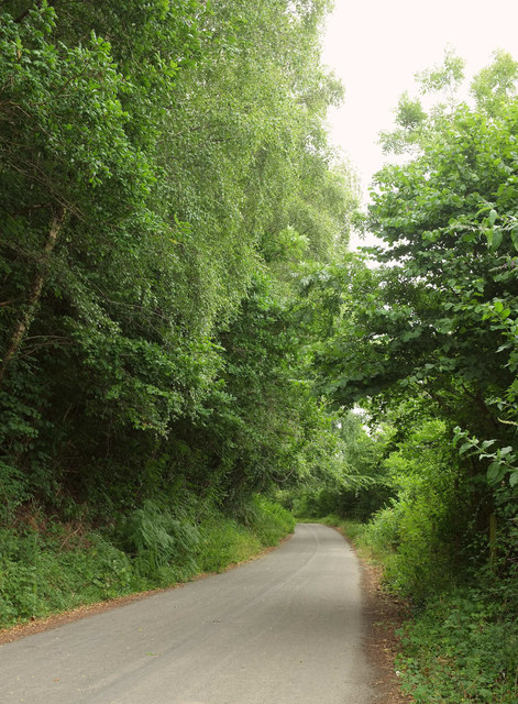 Lane past Higher Crockham Copse