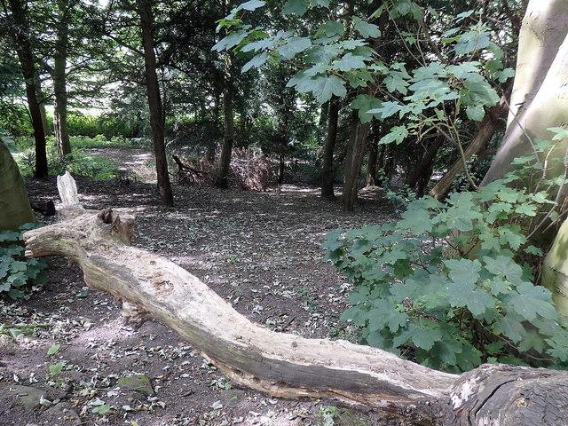Path junction near Heath