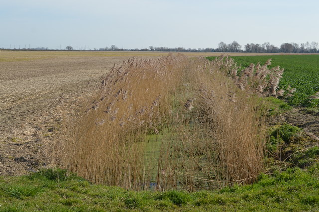 A reedy, eutrophic ditch