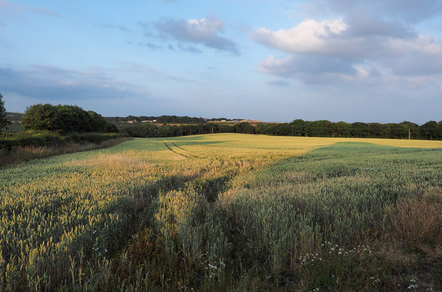 Low-angled sunshine over wheat field