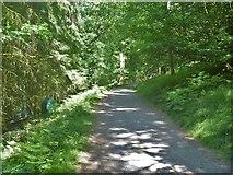 SK1987 : Bridleway in the wood by Michael Dibb
