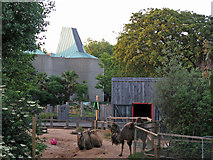 TQ2883 : Bactrian camels at London Zoo by Mike Quinn