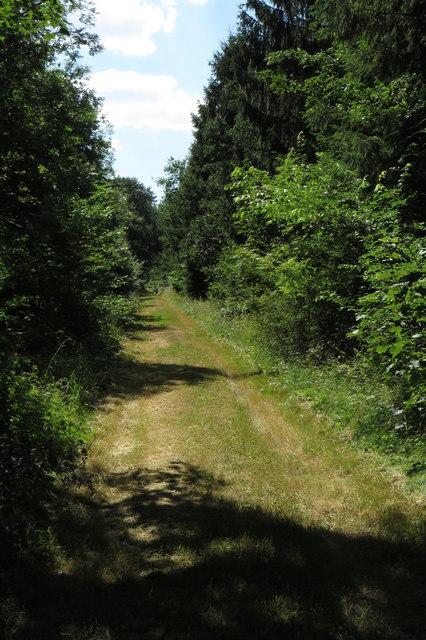 Ride through Old Pastures wood