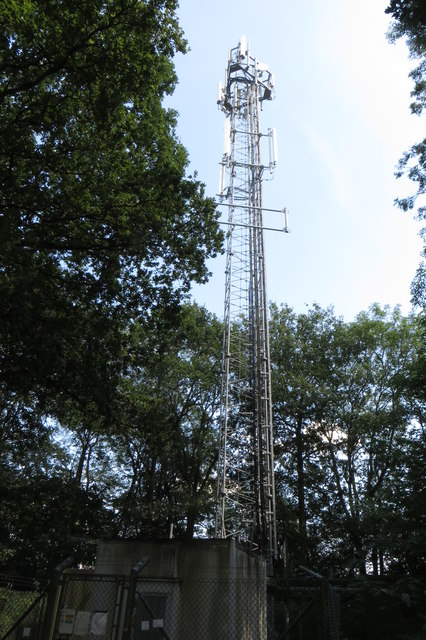 Telephone mast in Old Pastures wood