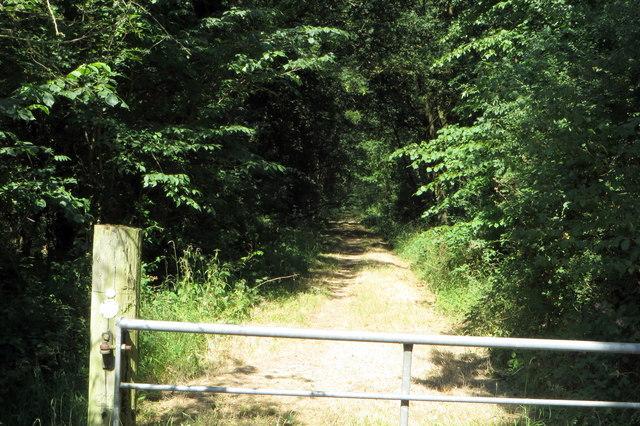 Milton Keynes Boundary Way goes into Old Pastures wood