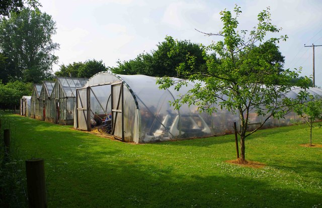 Group of polytunnels and greenhouses near Bampton, Oxon