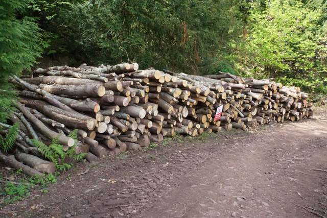 Pile of logs in Yearnor Wood