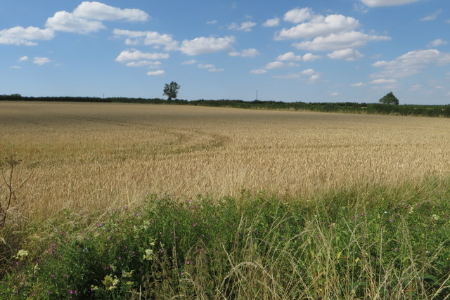 Farmland by Chase Park Road