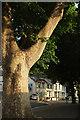 SX9164 : Lymington Road, Upton by Derek Harper