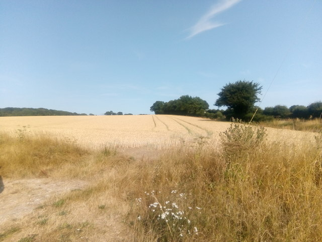 Field north of the railway line