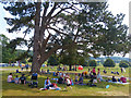 SO5063 : Sitting in the shade of a tree, Berrington Hall. Herefordshire by Robin Drayton