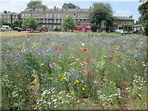 TL4558 : Hay meadow in one corner of Parker's Piece, Cambridge by Peter S