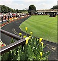 TL6161 : Yellow lilies and the parade ring - The July Course, Newmarket by Richard Humphrey