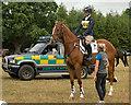 NY4657 : Cumbrian Horse Trials, Warwick Hall - 22 July 2018 (12) by The Carlisle Kid