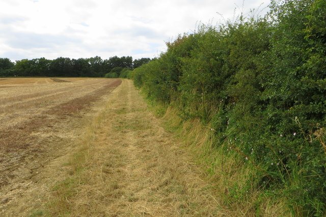 Northamptonshire Round footpath towards The Avenue