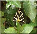 SX8964 : Jersey Tiger Moth, Chelston by Derek Harper