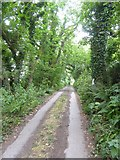 SX6745 : Track to Green Well from Lincombe by David Smith