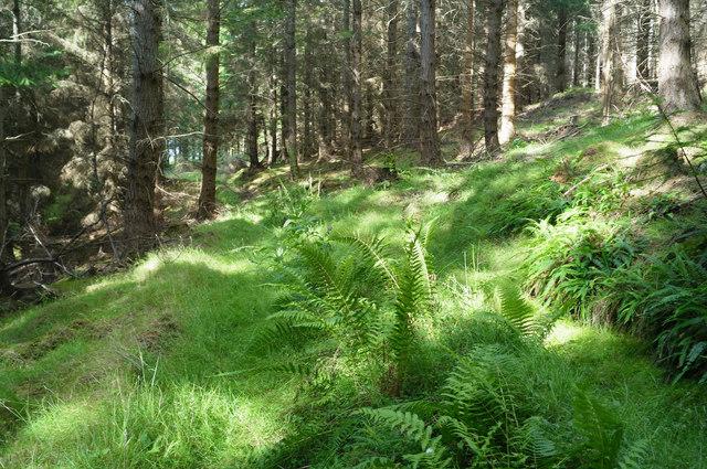 Line of old track, Black Wood, Belladrum