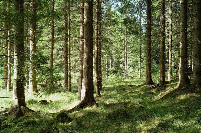Black Wood, Belladrum