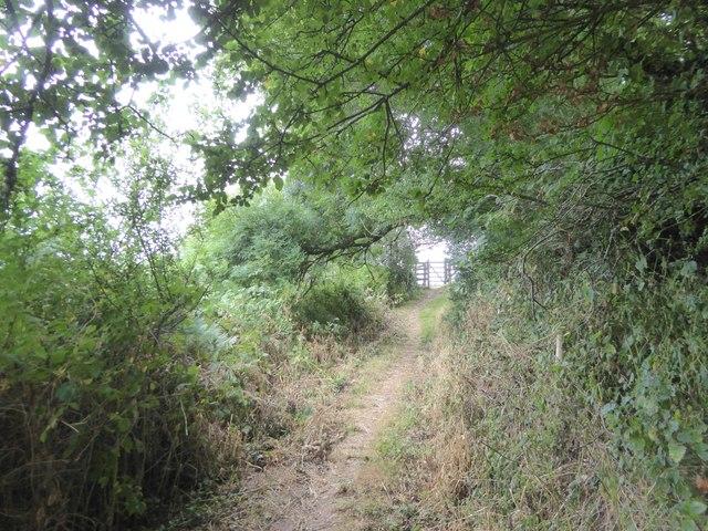 Avon Estuary Walk in Doctor's Wood, Bigbury